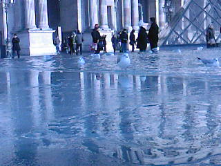 2010-0108-mouette1.jpg