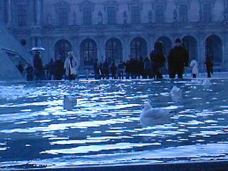 2010-0108-mouette2.jpg