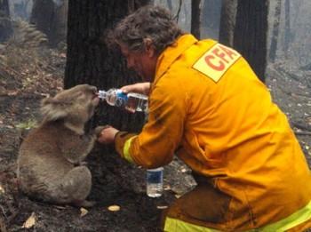 2019-0417-koala-pompier.jpg